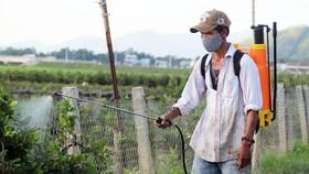 """Phun thuốc hóa học trừ sâu đang khiến thủ phủ mai vàng miền Trung trở thành vùng """"đất chết"""""""