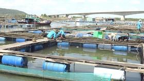 Khu trung tâm của làng cá bè Long Sơn