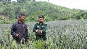 Thiếu tá Dương Công Dũng, cán bộ biên phòng Đồn Biên phòng Làng Ho, hướng dẫn đồng bào  Pa Cô, Vân Kiều ở bản Trung Đoàn chăm sóc dứa trồng thí điểm