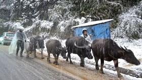 Rét đậm, rét hại đang là nỗi lo của người dân các tỉnh vùng núi phía Bắc. Nguồn VTC