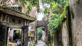 Đường làng Cự Phú