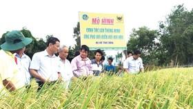 Quy trình canh tác giống lúa mới thích ứng biến đổi khí hậu