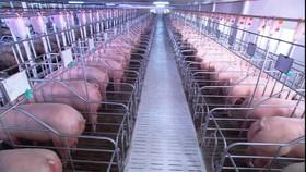 Doanh nghiệp bình ổn giá, góp phần ổn định thị trường chăn nuôi