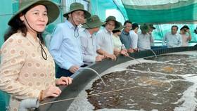 Chủ tịch  HĐND TPHCM Nguyễn Thị Lệ giám sát  sản xuất nông nghiệp tại huyện Cần Giờ. Ảnh: VIỆT DŨNG