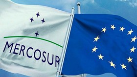 Hội nghị Giao thương trực tuyến Việt Nam - Mercosur 2020