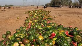 Thất thoát, lãng phí thực phẩm gây thiệt hại khoảng 2% GDP