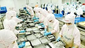 Chế biến thực phẩm xuất khẩu tại Công ty Cofidec, quận 12, TPHCM. Ảnh: CAO THĂNG