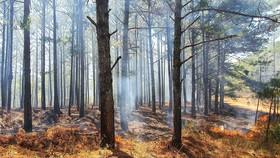 Đám cháy thực bì dưới tán rừng thông tại Đà Lạt, trong khi cảnh báo cháy rừng đang ở mức cực kỳ nguy hiểm. Ảnh: ĐOÀN KIÊN
