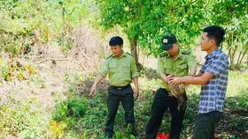 Thả 17 loài động vật hoang dã về rừng