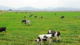 Bình Phước: Xây dựng chuỗi liên kết chăn nuôi bền vững phục vụ xuất khẩu
