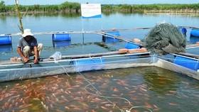 Đồng Nai: Giá thức ăn chăn nuôi tăng, người nuôi cá lao đao