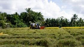 Hậu Giang đẩy nhanh tiến độ thu hoạch lúa hè thu