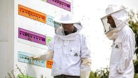 Tổ ong robot