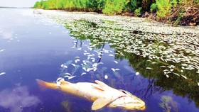 Cá chết hàng loạt do ô nhiễm môi trường ở bang Lousiana, Mỹ