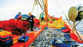 Nhiều sáng kiến trong đánh bắt  trên biển giúp ngư dân Hoài Nhơn,  tỉnh Bình Định khá giả hơn. Ảnh: ĐẶNG VĂN HẢI