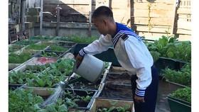 Chăm sóc rau xanh trên đảo Đá Lớn