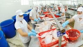 Chế biến cá xuất khẩu tại Công ty APT. Ảnh: CAO THĂNG