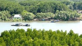 Xây dựng thương hiệu rừng Cần Giờ như là Amazon của Việt Nam