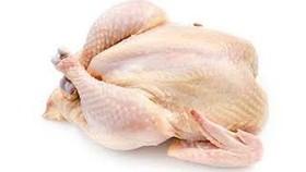 Cẩn trọng với chất lượng gà mái đẻ không rõ nguồn gốc