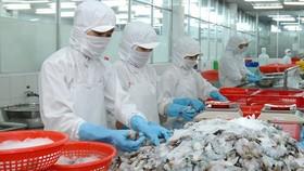 Chế biến tôm xuất khẩu tại Công ty cổ phần Thủy sản số 1