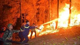 Chế tài hành vi gây cháy rừng
