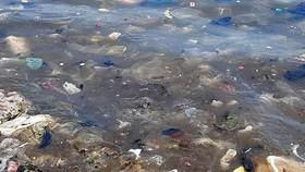 Rác ngập ngụa tràn ra biển, bãi tắm trở thành bãi rác. Nhiều du khách trong và ngoài nước trước kia hay ghé bãi biển Tân Phụng thì nay khiếp đảm bởi rác thải