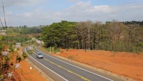 Rừng phòng hộ cảnh quan trên quốc lộ 14 bị tàn phá nghiêm trọng
