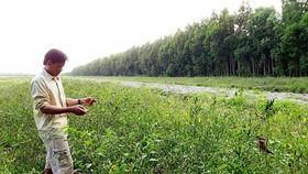 Đồng Nai: Cần 500 tỷ đồng trồng rừng cảnh quan