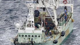 5 thủy thủ Việt Nam mất tích trong vụ chìm tàu ở ngoài khơi Nhật Bản