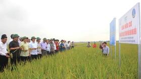 """Hiệu quả từ mô hình sản xuất lúa hữu cơ đang góp phần giúp nông dân Quảng Trị làm giàu trên vùng """"đất chết"""" năm xưa"""