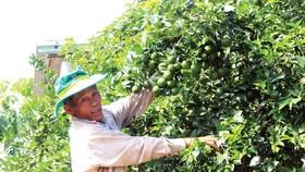 Lão nông Phạm Đình Độ có cơ ngơi bạc tỷ nhờ vườn cây ăn trái ở đồi Bà Nông