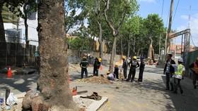 Hạn chế di dời, đốn hạ cây xanh tại các dự án, công trình