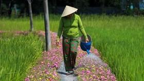 Biến đường rác thành đường hoa