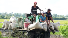 Đưa máy móc vào sản xuất lúa ở ĐBSCL