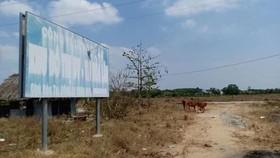 Đánh thuế nặng hoặc trưng mua nhà, đất bỏ hoang