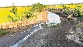 Mùa khô năm 2021: Xâm nhập mặn vẫn cao