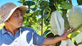Anh Trần Văn Tuấn, một nông dân làm giàu thành công ở bản Chuôn, bên vườn cây của gia đình