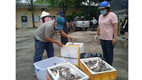 Anh Lê Văn Hải và chị Nguyễn Thị Kim Oanh nhận các thùng hải sản từ Quảng Bình chuyển tặng bà con TPHCM