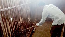 Vụ nuôi nhốt hổ tại Nghệ An: Khởi tố vụ án, bắt tạm giam 1 đối tượng