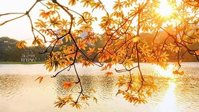 Mùa thu năm ấy…