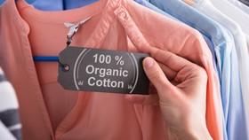 May mặc là một trong những ngành công nghiệp có tác động rất lớn đến môi trường