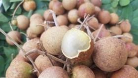 Bộ Nông nghiệp bàn chuyện tiêu thụ nhãn, chuối, tôm cua… cho miền Nam