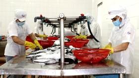 Công nhân Công ty cổ phần Kinh doanh thủy hải sản Sài Gòn tăng ca sản xuất.