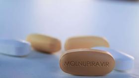 Khá nhiều lưu ý được đưa ra đối với bệnh nhân Covid-19 tham gia thí điểm điều trị bằng thuốc Molnupiravir.