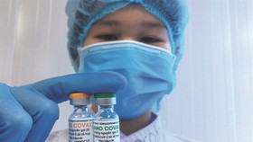 Vẫn chưa thể cấp phép khẩn cấp vaccine Covid-19 Nano Covax.