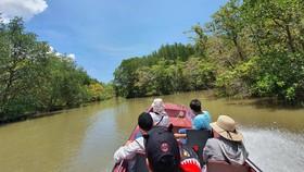 Trải nghiệm đi ca nô khám phá rừng đước ở Cần Giờ. Ảnh: Bảo Vy
