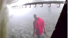 Hàng nghìn con lợn bị xông hơi đến chết vì Covid-19