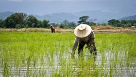Thái Lan lên kế hoạch 956 triệu USD tăng thu nhập khu vực nông thôn, nông nghiệp
