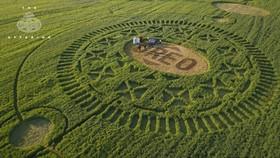Cánh đồng lúa mì ở Kansas được tỉa tót theo hình bánh Oreo. Nguồn: FOX News.