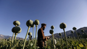 Afghanistan vẫn là nhà cung cấp thuốc phiện bất hợp pháp lớn nhất thế giới. Ảnh: Reuters